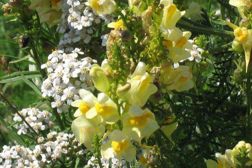 Перекрёсток цветы